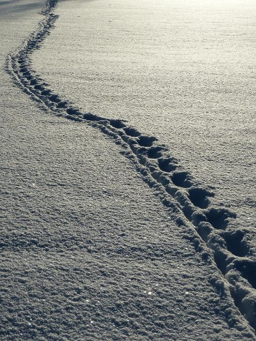 snow-69830_1280.jpg