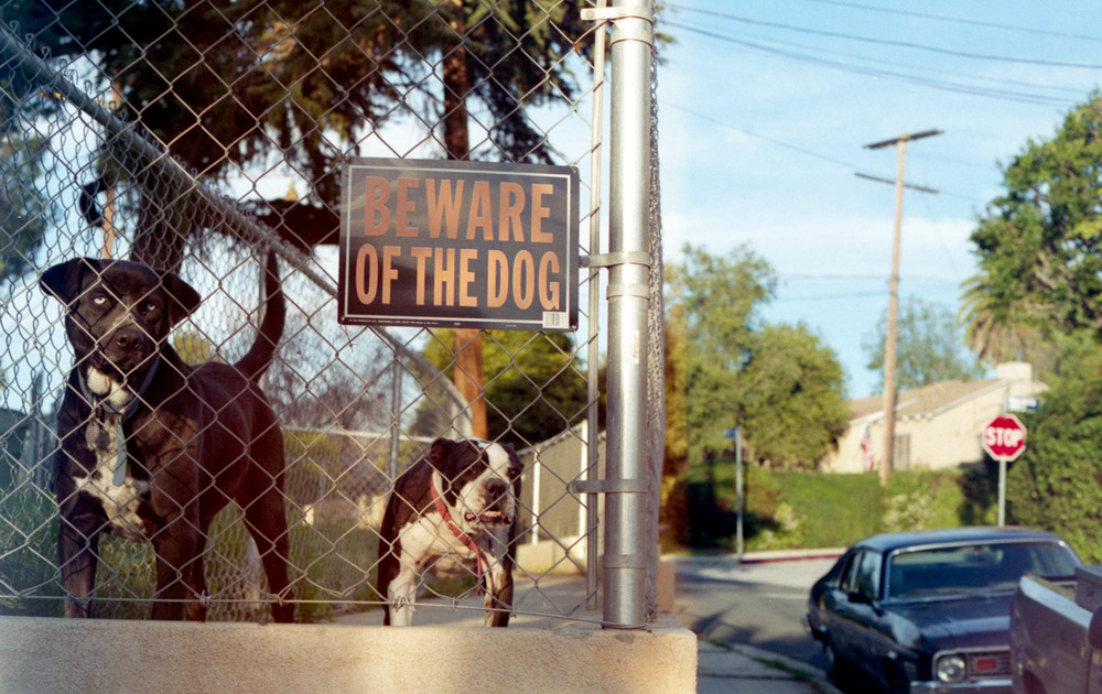 beware of dog-093.jpg