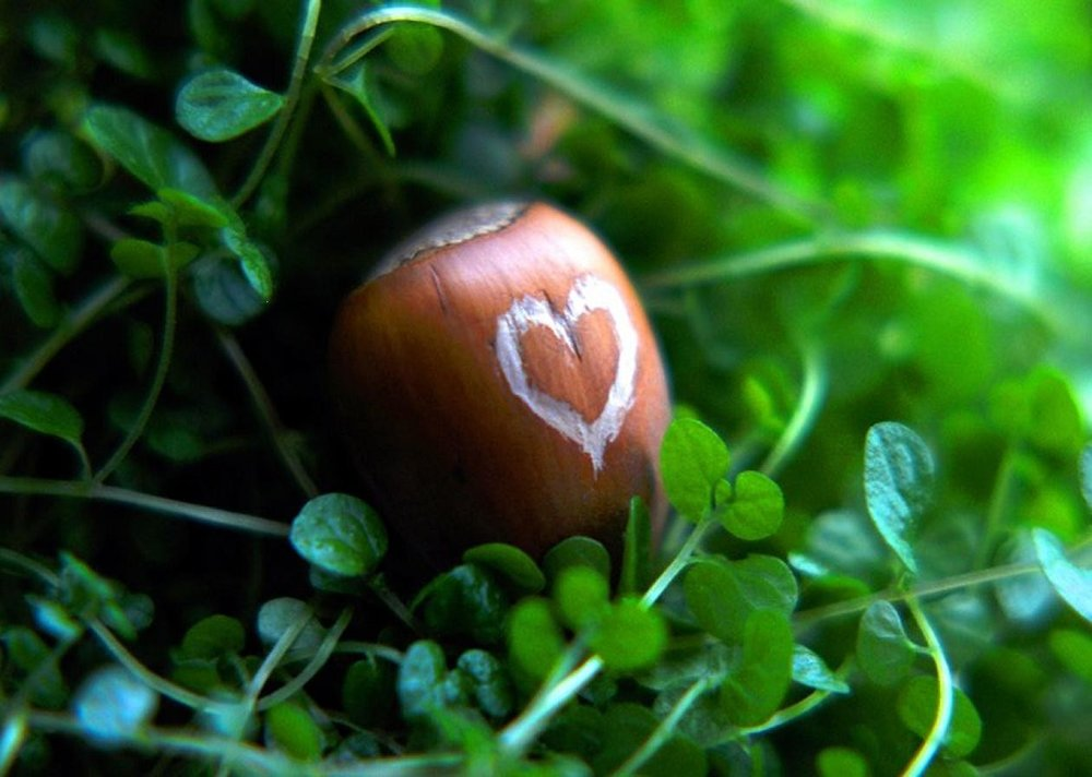 misc-green-cute-nut-clover-love-heart-chestnut-photography-background-images.jpg
