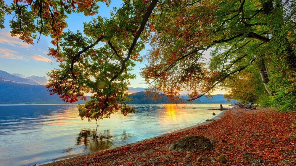 misc-nature-sky-mountain-sun-dawn-river-trees-water-beauty-fallen-autumn-reflection-beach-leaves-background-images.jpg