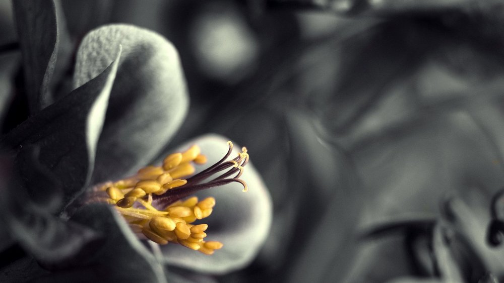 flowers-white-artistic-touch-photography-beauty-yellow-black-closeup-nature-jasmine-flower-wallpaper-desktop-1920x1080.jpg