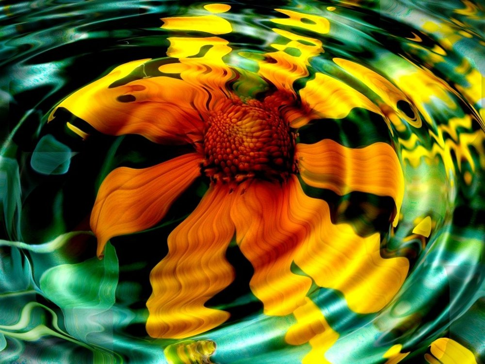 flowers-reflection-yellow-flower-wallpaper-computer.jpg