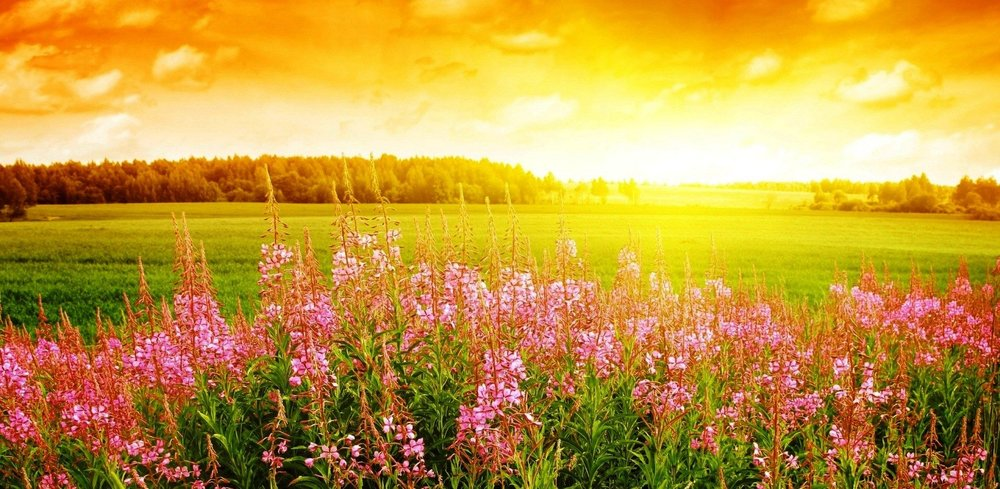 flowers-hot-warm-breeze-summer-flower-wallpaper-for-desktop-1920x938.jpg