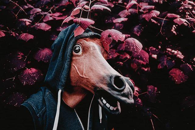 Bojack Horseman #tbt