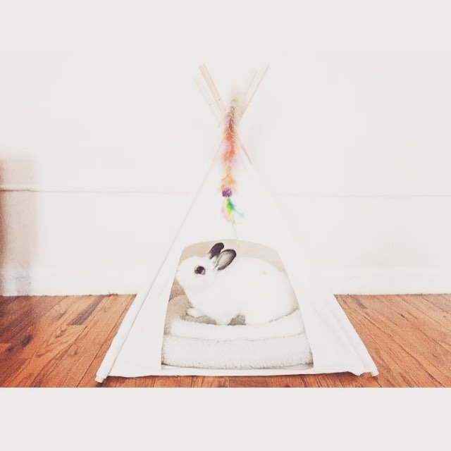 @pillowthebun takes over the cat teepee! #fluffy #bunny #itsminenow #icallit #dextonkids #teepee #homesweethome #comfy