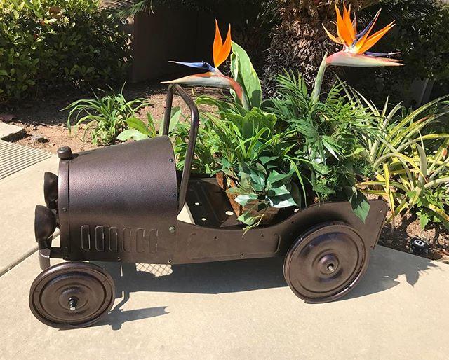 Dexton Vintage Car Planter with two bird passenger #dextonkids #dexton #birdsofparadise #flowers #planters #planter #gardeningisfun #rusticdecor #gardenlife #gardengram