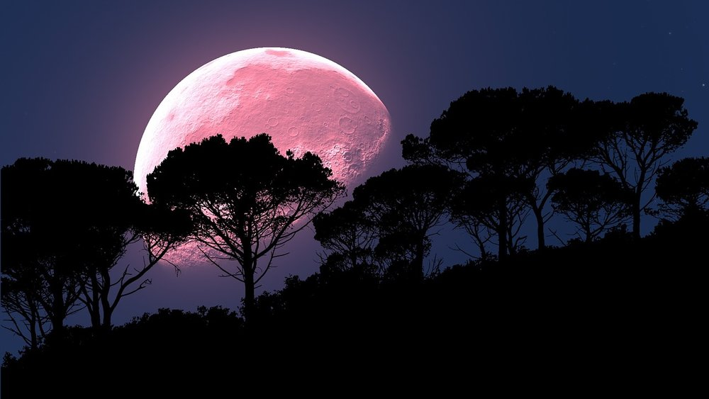 The full moon in April is known as the Pink Moon - the spectacle is named after the wildflowers which grow in the United States and Canada in the spring.    The moon is also known as Egg Moon, due to spring egg-laying season.    Some coastal tribes refer to it as Fish Moon because it appeared at the same time as the shad fish which swam upstream at this time of the year.    This year the Pink Moon will fall between Sunday April 29 and Monday April 30, it just depends on where you live.