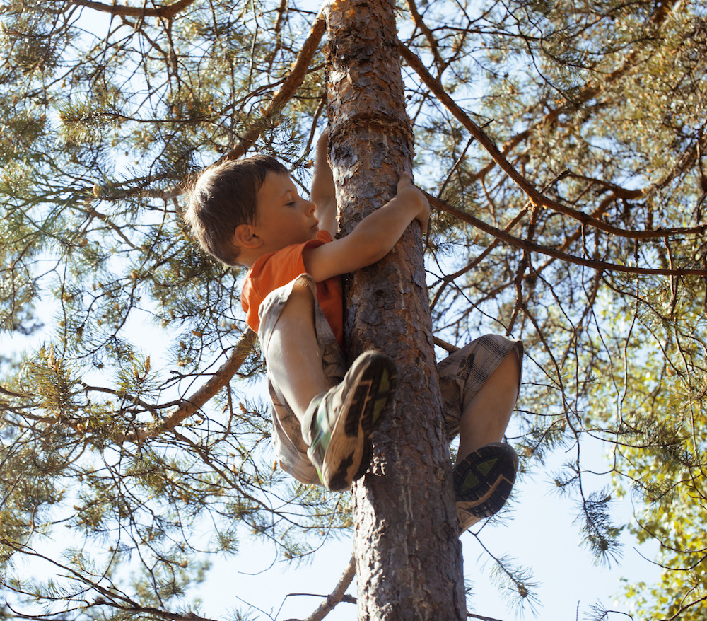 boy climbing tree.jpeg