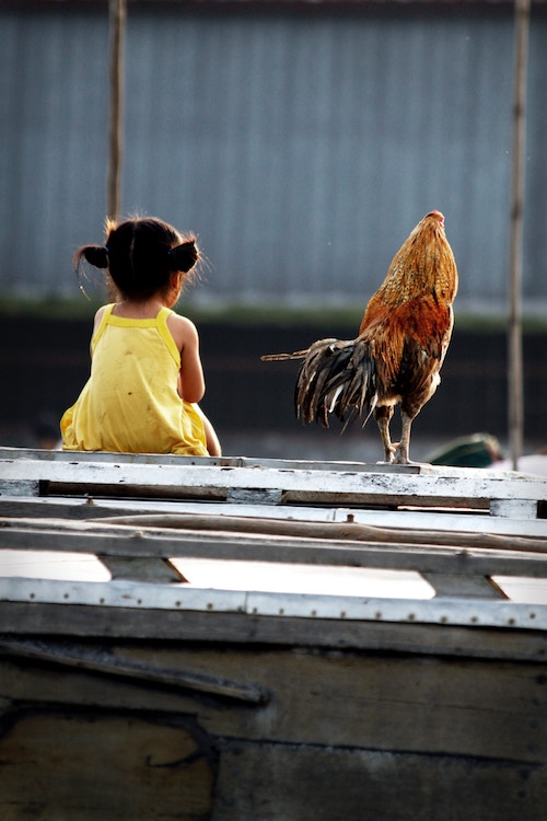 girl and rooster.jpg