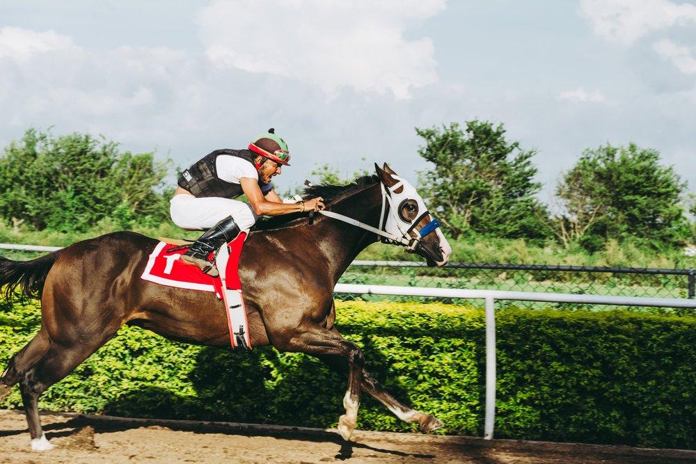 racehorse.jpg