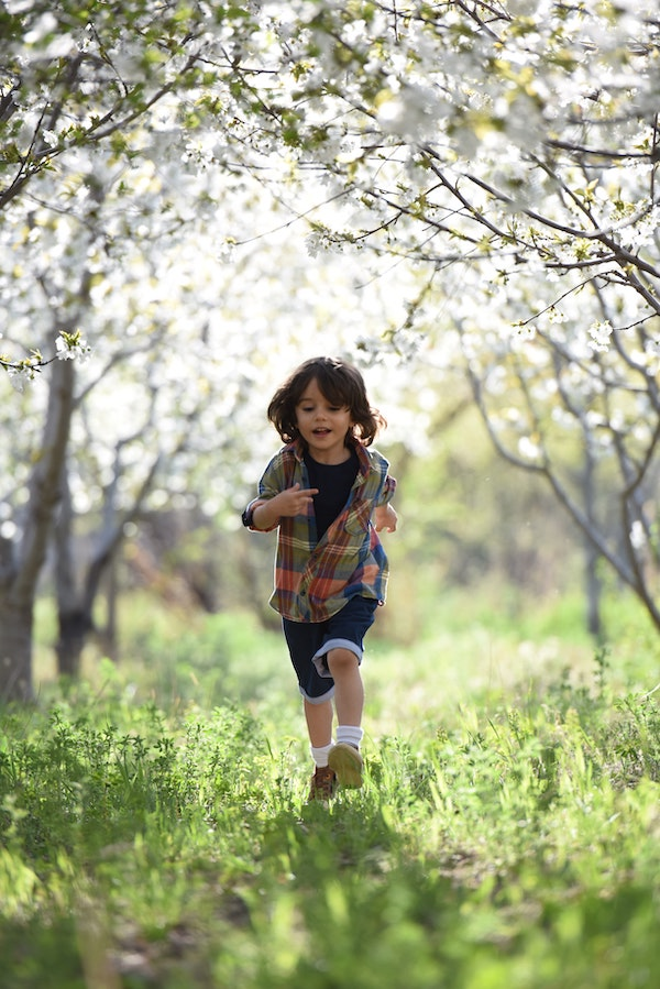 blurred-background-boy-child-1416736.jpg