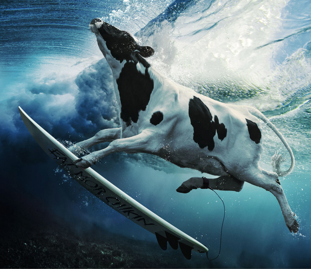 chick-fil-a_surfing.jpg