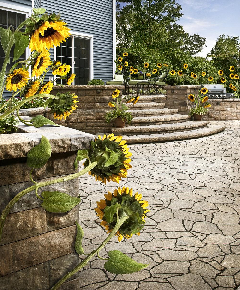 belgard_sunflowers@465.jpg