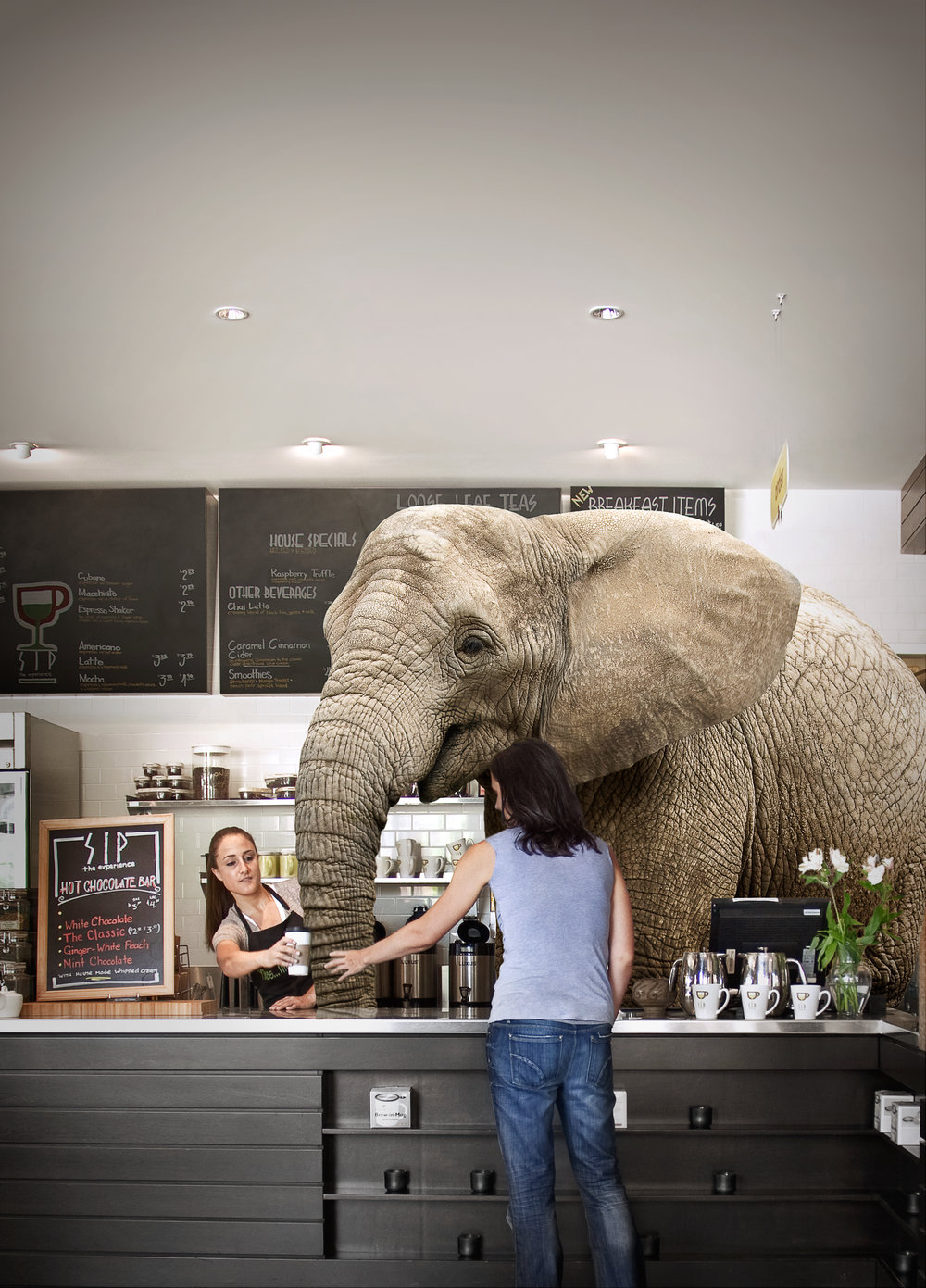 elephant_coffeeshop@465.jpg