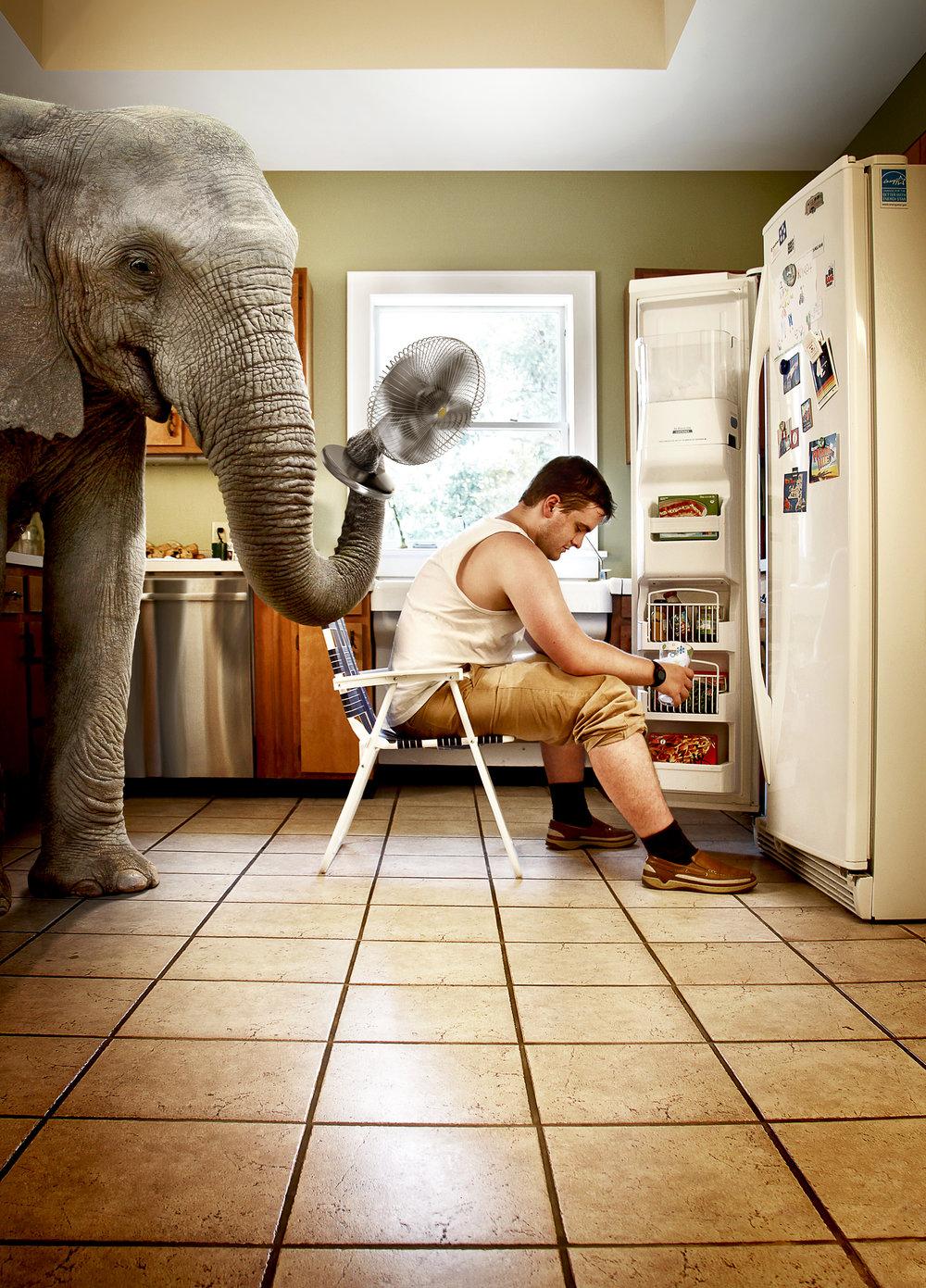 elephant_kitchen@465.jpg