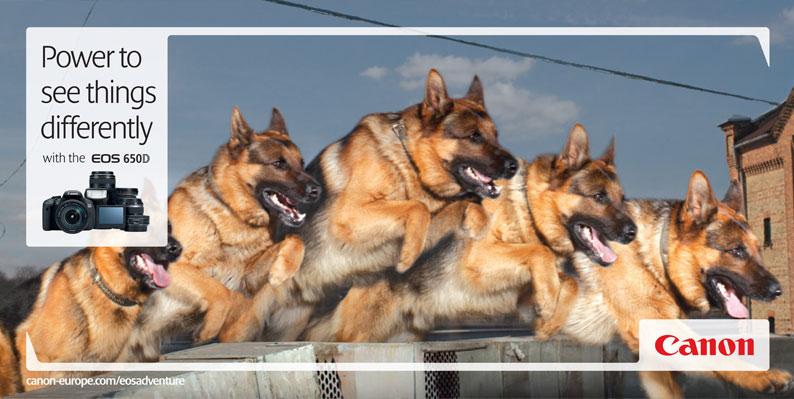 3_dog-print.jpg