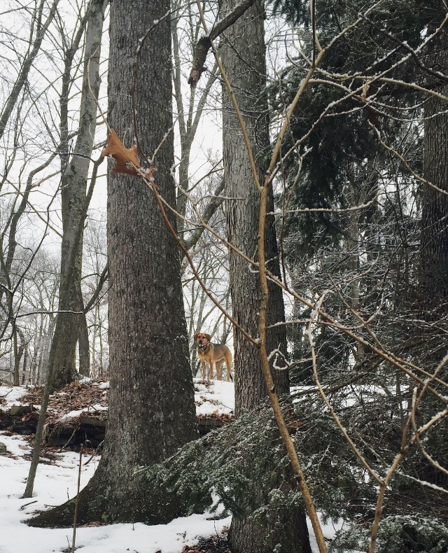 Alice in the trees | photo by Phoebe Stout