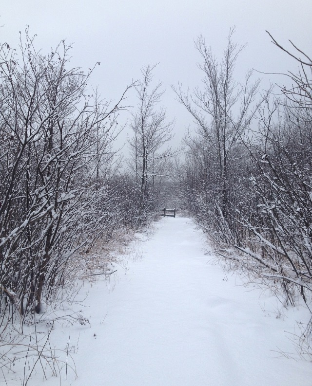 boardwalk in winter | photo by Phoebe Stout
