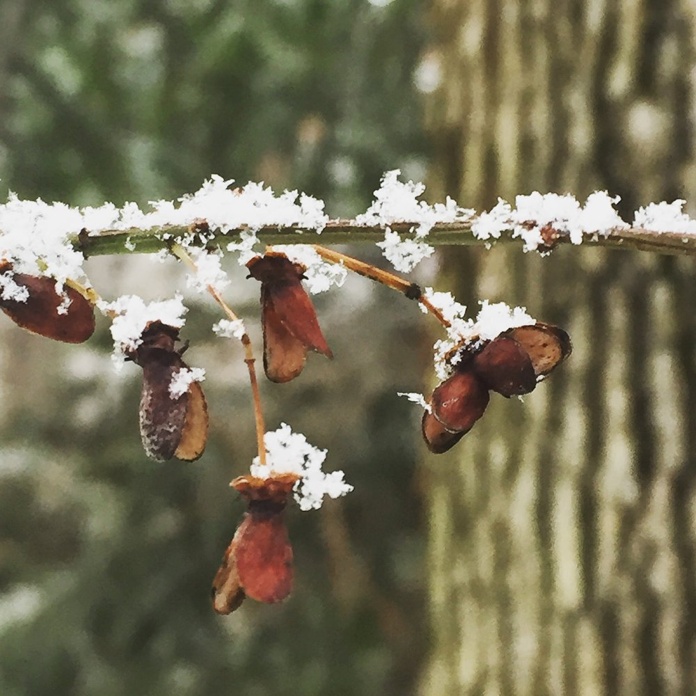 tiny details | photo by Phoebe Stout