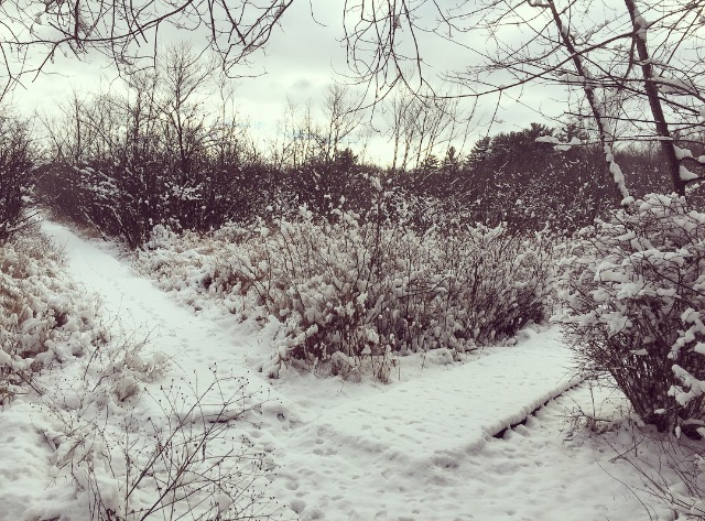 two paths | photo by Phoebe Stout