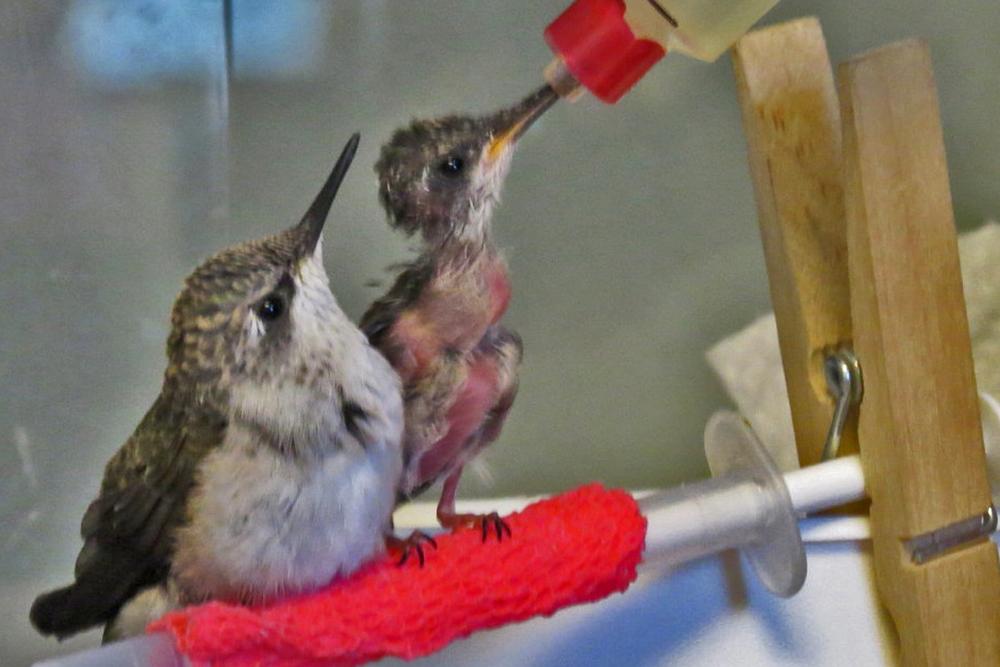 nhummingbird.jpg