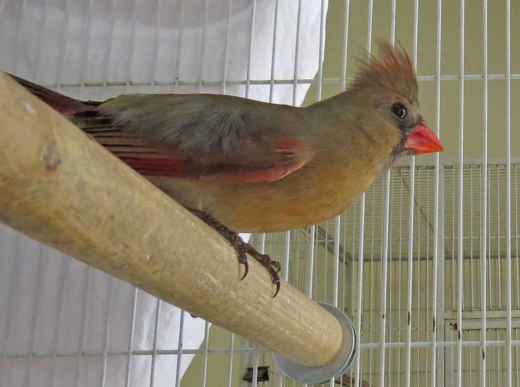 Wild Bird Rehabilitation