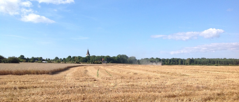 Looking toward Levide church, combine half way through the field.