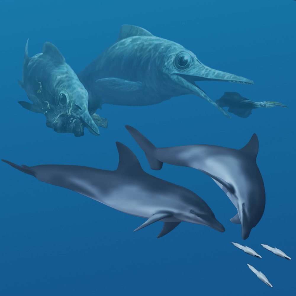 Ichthyosaurs and dolphins evolved remarkably similar body forms millions of years apart from each other, even though one is a reptile and the other is a mammal. Art by Karen Carr