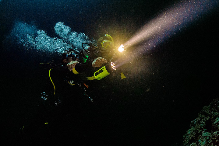 night diving in british columbia is incredible - see for yourself in the padi night adventure dive