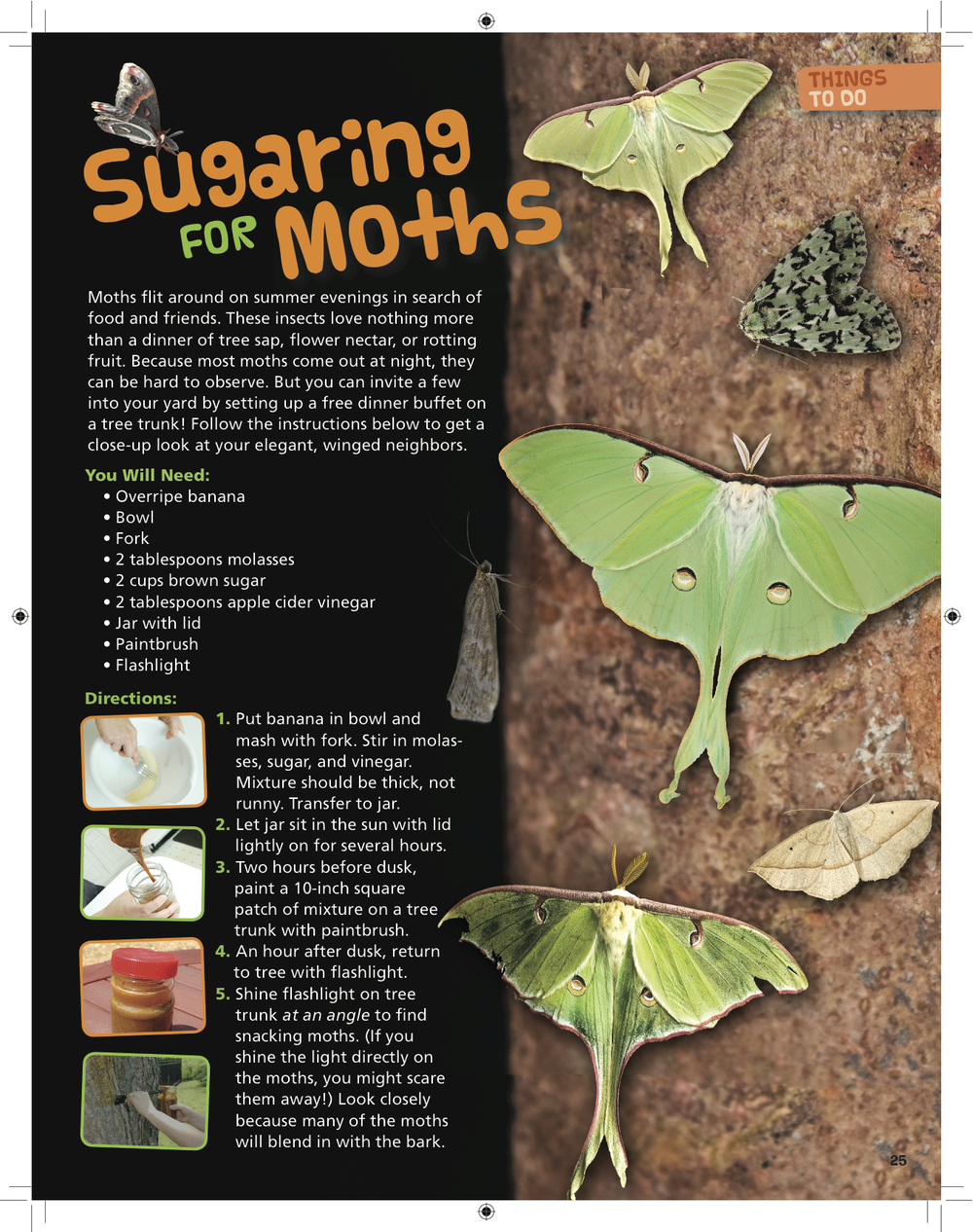 %22Sugaring for Moths%22.jpg