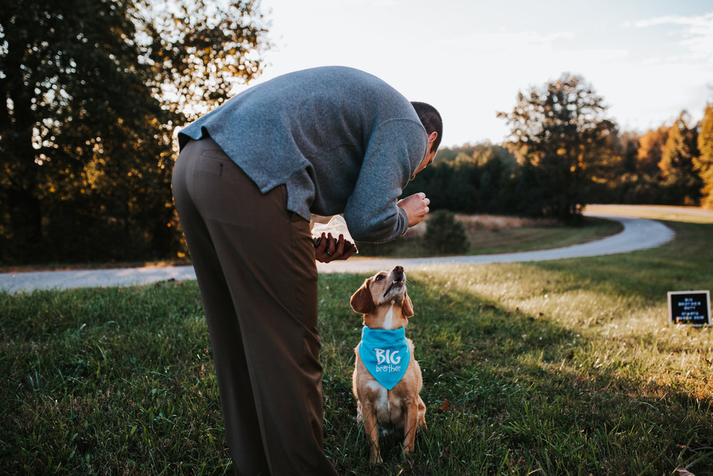 Baby / Pregnancy Announcement With Dog | Greensboro Winston-Salem, NC Photographer