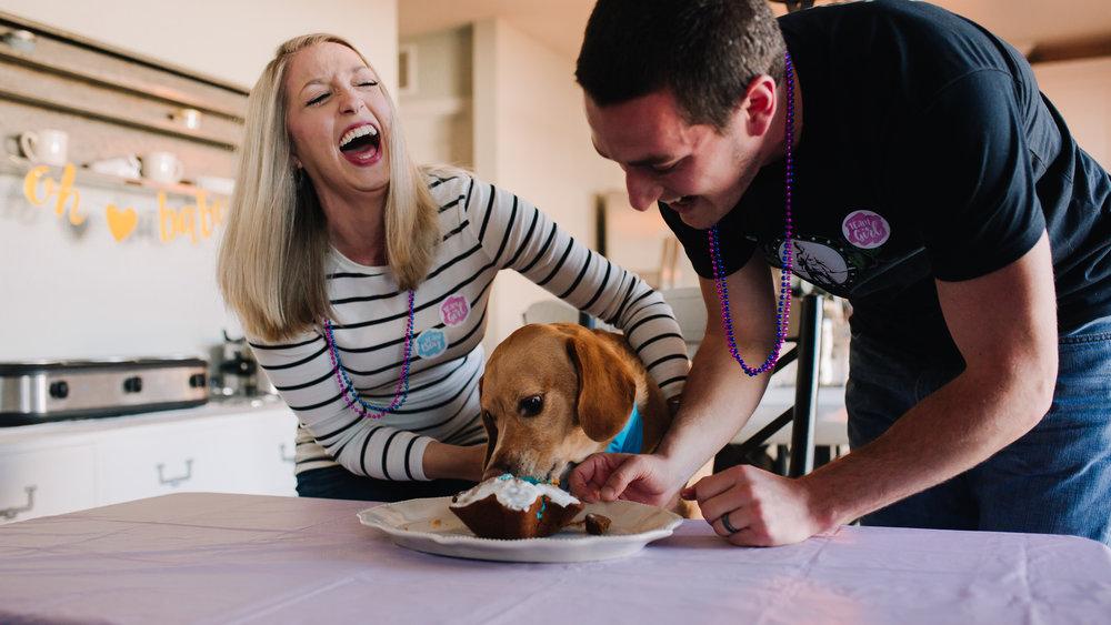 Boy Gender Reveal with Dog! | Greensboro Winston-Salem, NC Photographer