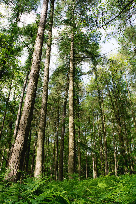 fern-prehistoric-trees-caplor-fownhope