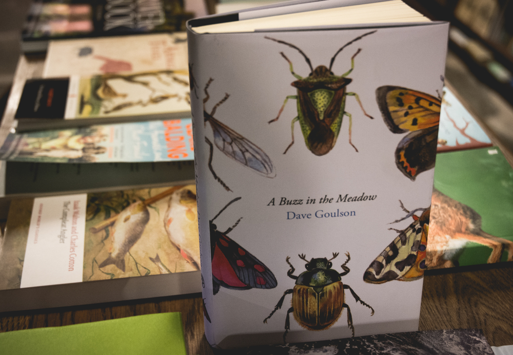 natural-history-insects-book-display-richard-booths-shop-hay.jpg