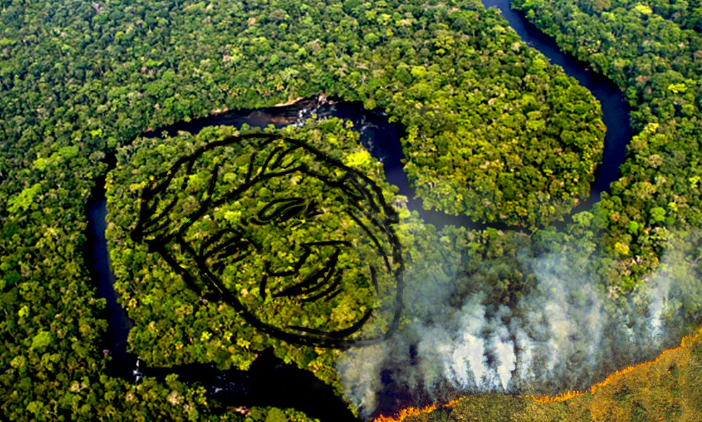 Over 75% of the amazon has been destroyed as a result of deforestation. Using bio friendly paint we can bring this issue the attention it deserves and mark a line of defence against further destruction. Donald would be appalled to see any further damage done, especially as it's viewable from Google Maps.