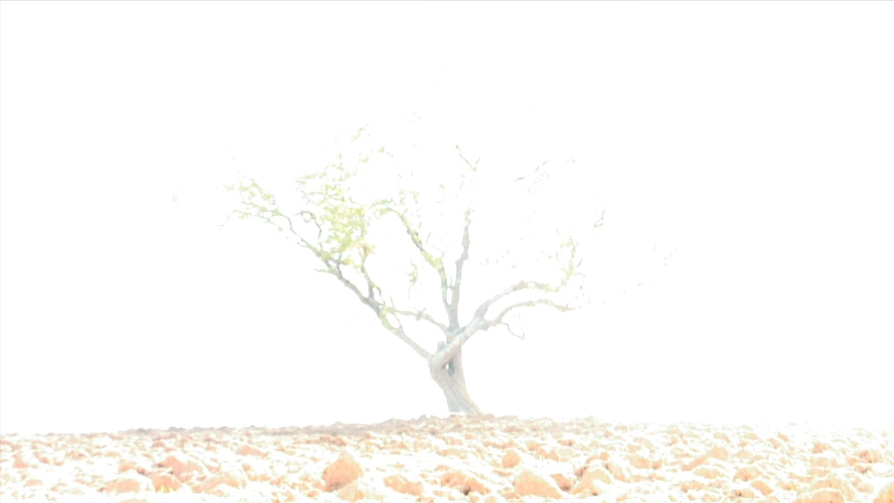 5-Gorchakovs-Wish-Tree-white.jpg