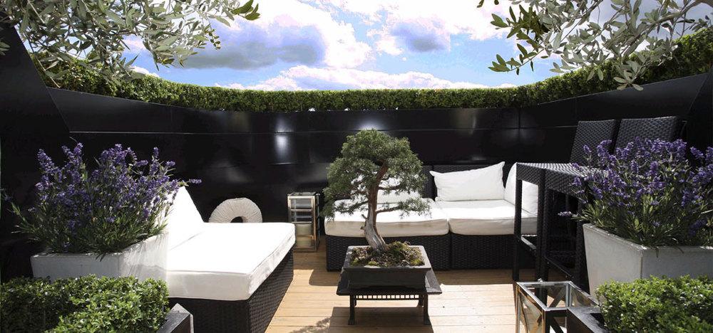 hcl_bonsai1.jpg
