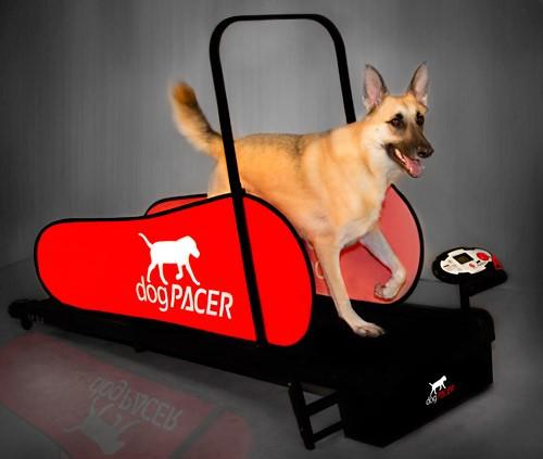 dogpacer-4_3.jpg