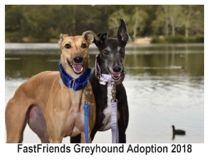 - 2018 FastFriends Calendars Available at the Dog Wash $15