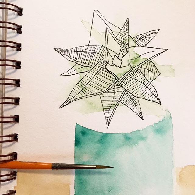 Quick watercolor doodles. #succulents #watercolor #ink