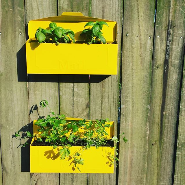 Repurposed these old mailboxes into an herb garden! #spraypaint #basil #parsley #cleartheclutter
