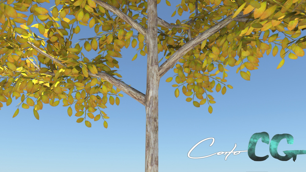 coitoCG_tree01_renderMR19
