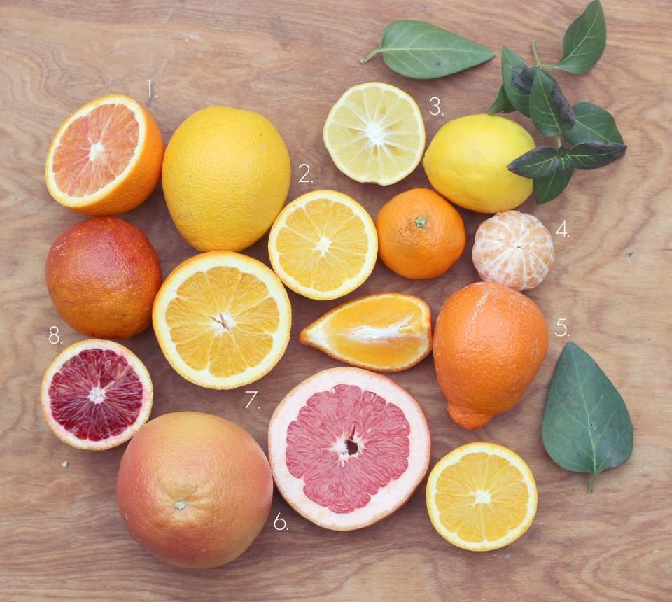 CitrusGuide