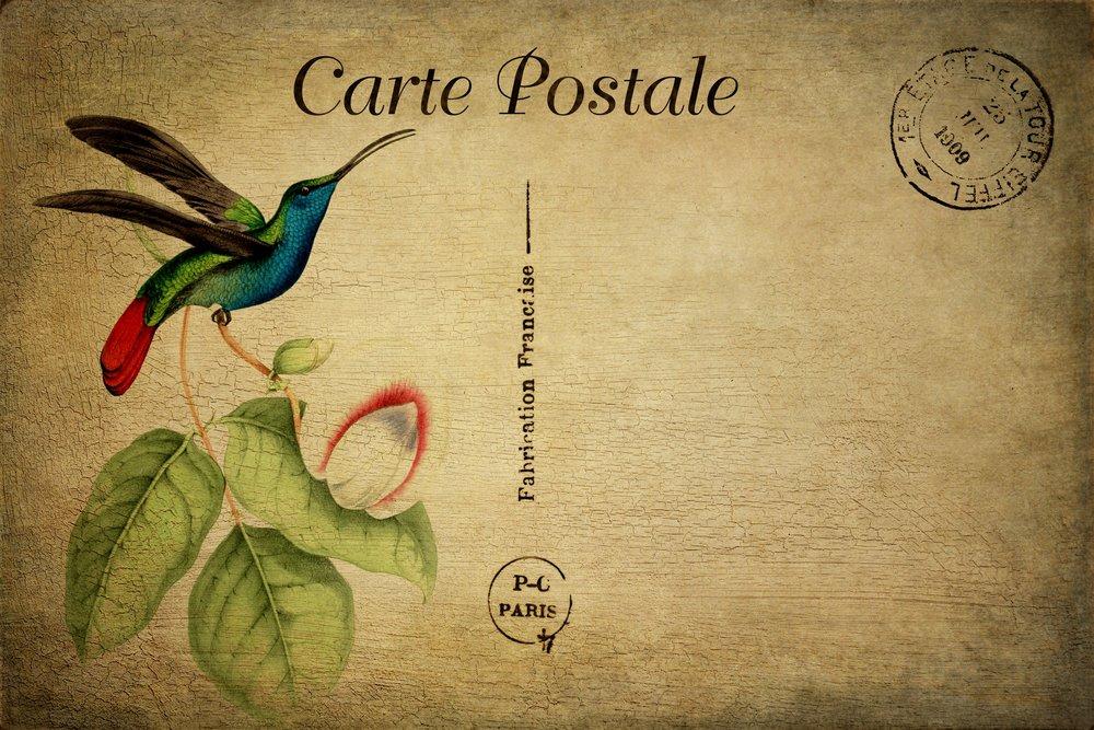 bird-vintage-postcard.jpg