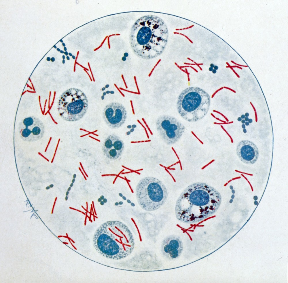 R. Muir, Bacteriological Atlas, 1927 by Wellcome Images