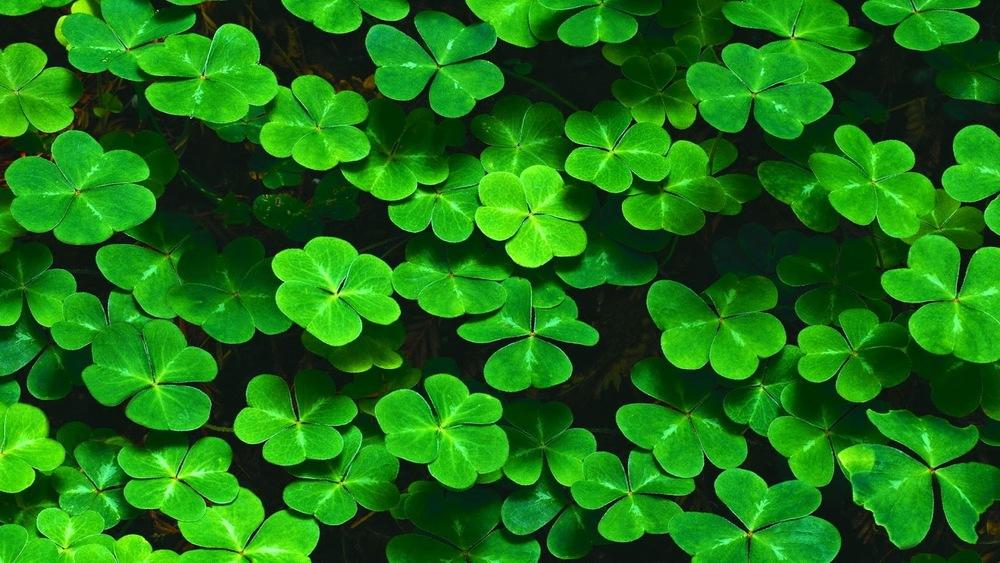 nature-landscapes_hdwallpaper_4-leaf-clover-patch_20806.jpg