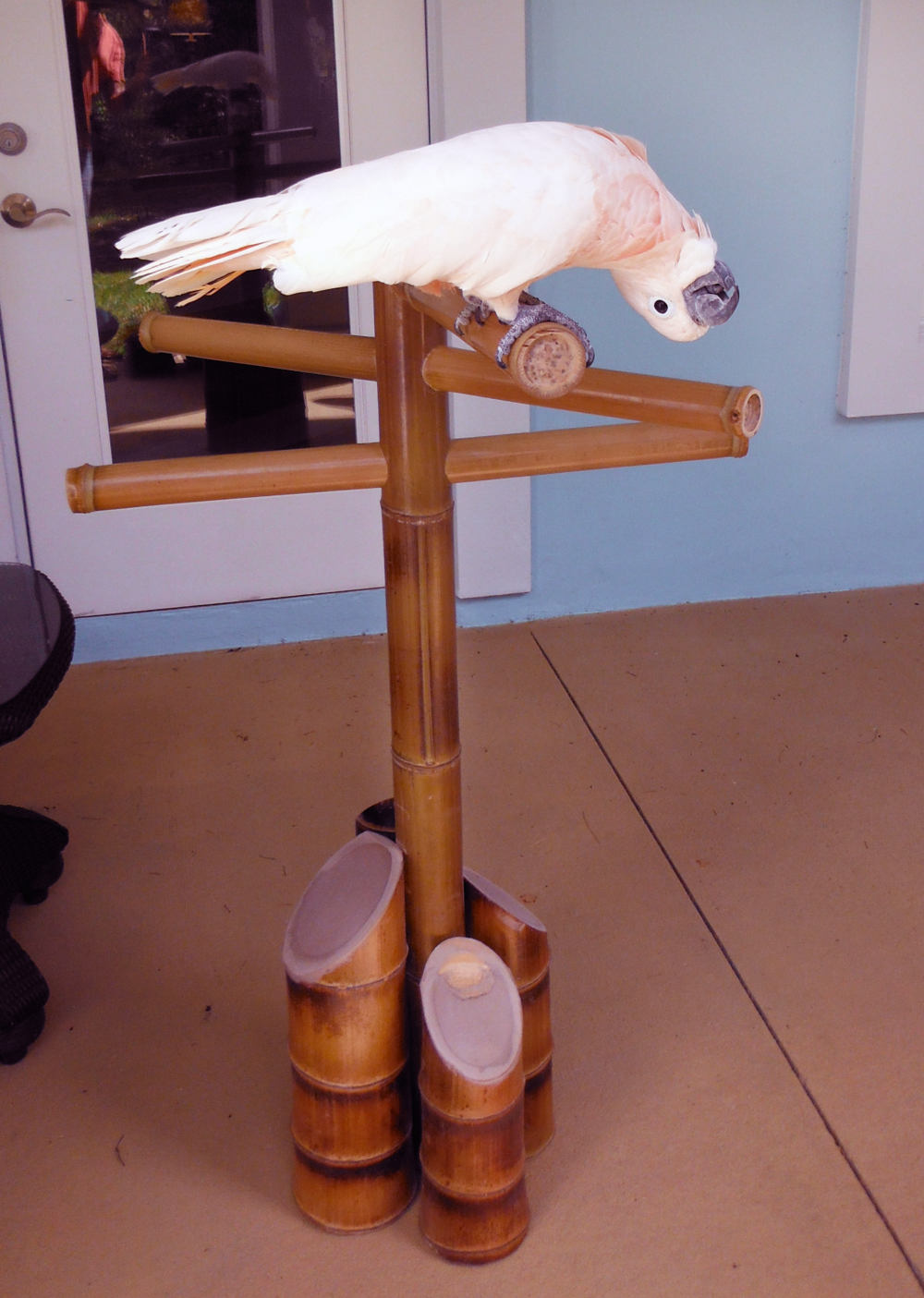 bamboo bird perch side.png