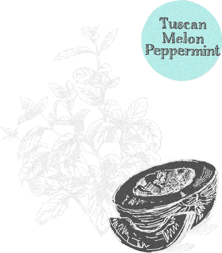 tuscan melon peppermint tummydrops