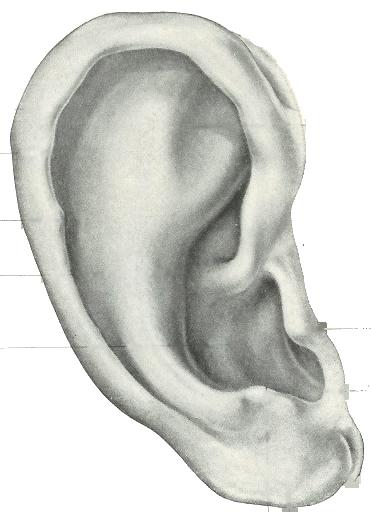 ear FINAL.png