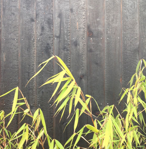 Shou-sugi-ban--charred cedar siding — CAST architecture
